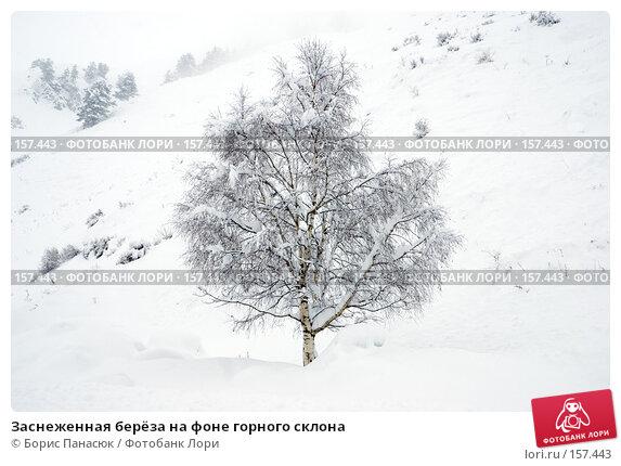 Заснеженная берёза на фоне горного склона, фото № 157443, снято 13 декабря 2007 г. (c) Борис Панасюк / Фотобанк Лори