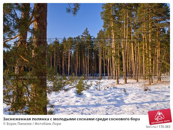 Заснеженная полянка с молодыми соснами среди соснового бора, фото № 170383, снято 2 января 2008 г. (c) Борис Панасюк / Фотобанк Лори
