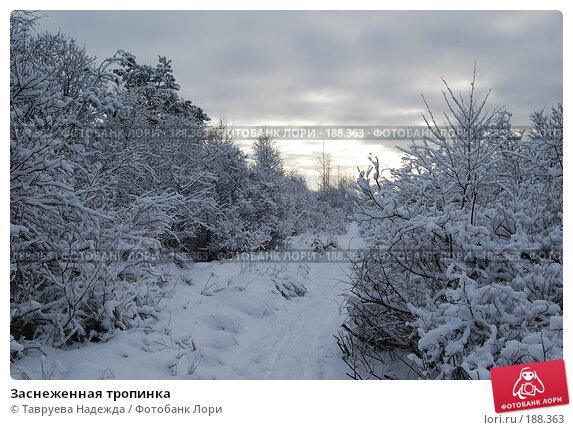 Заснеженная тропинка, фото № 188363, снято 27 января 2008 г. (c) Тавруева Надежда / Фотобанк Лори