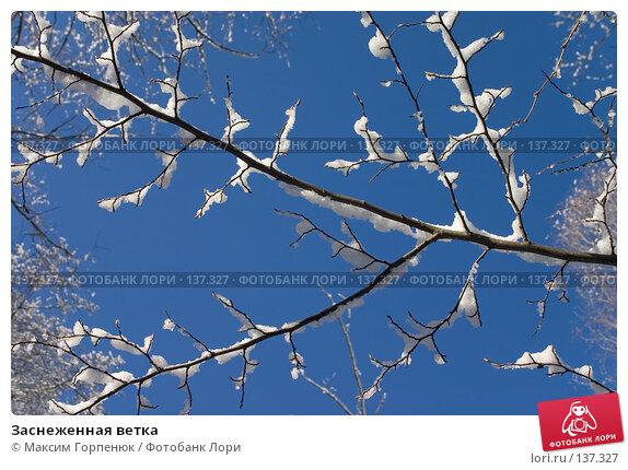 Купить «Заснеженная ветка», фото № 137327, снято 22 марта 2018 г. (c) Максим Горпенюк / Фотобанк Лори