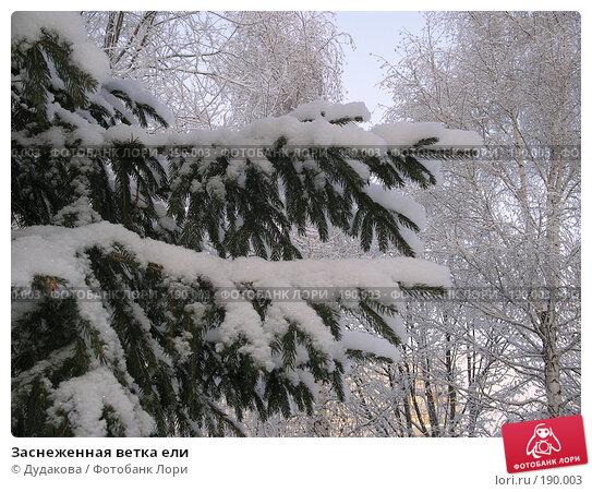 Заснеженная ветка ели, фото № 190003, снято 16 декабря 2003 г. (c) Дудакова / Фотобанк Лори
