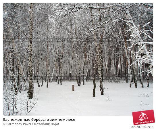 Заснеженные берёзы в зимнем лесе, фото № 140915, снято 15 февраля 2007 г. (c) Parmenov Pavel / Фотобанк Лори
