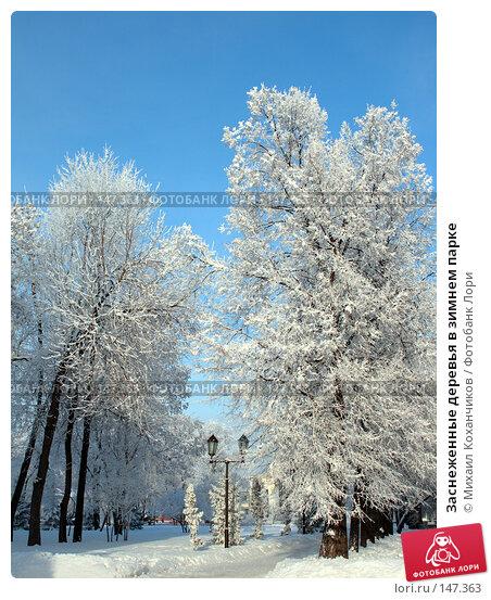 Заснеженные деревья в зимнем парке, фото № 147363, снято 13 декабря 2007 г. (c) Михаил Коханчиков / Фотобанк Лори
