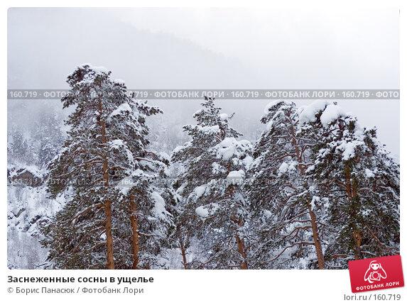 Заснеженные сосны в ущелье, фото № 160719, снято 14 декабря 2007 г. (c) Борис Панасюк / Фотобанк Лори