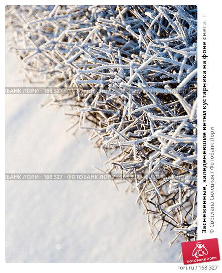 Заснеженные, заледеневшие ветви кустарника на фоне снега. Красивый фон, фото № 168327, снято 8 января 2008 г. (c) Светлана Силецкая / Фотобанк Лори