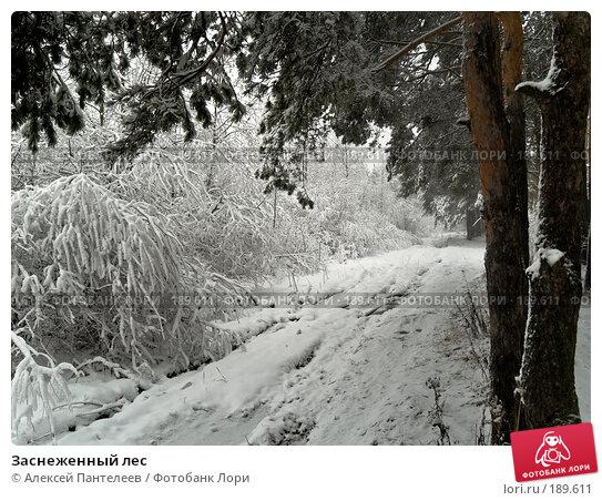 Заснеженный лес, фото № 189611, снято 28 ноября 2007 г. (c) Алексей Пантелеев / Фотобанк Лори