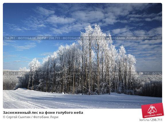 Заснеженный лес на фоне голубого неба, фото № 298711, снято 20 января 2008 г. (c) Сергей Сынтин / Фотобанк Лори