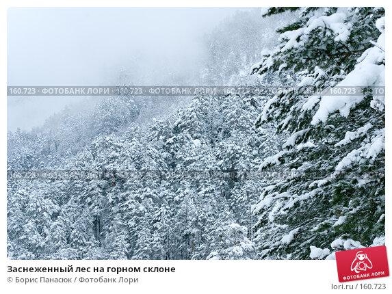 Заснеженный лес на горном склоне, фото № 160723, снято 14 декабря 2007 г. (c) Борис Панасюк / Фотобанк Лори