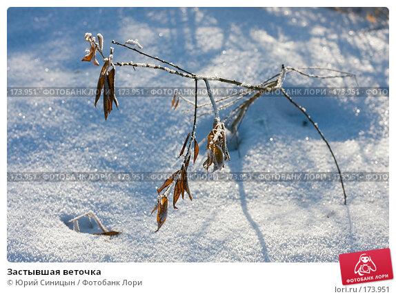 Застывшая веточка, фото № 173951, снято 8 января 2008 г. (c) Юрий Синицын / Фотобанк Лори