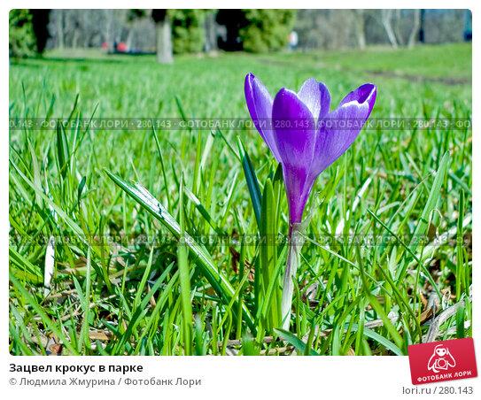 Купить «Зацвел крокус в парке», фото № 280143, снято 20 марта 2008 г. (c) Людмила Жмурина / Фотобанк Лори