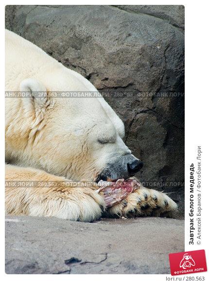 Завтрак белого медведь, фото № 280563, снято 6 мая 2008 г. (c) Алексей Баранов / Фотобанк Лори