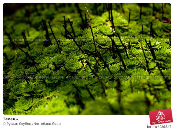 Купить «Зелень», фото № 286547, снято 4 августа 2007 г. (c) Руслан Якубов / Фотобанк Лори
