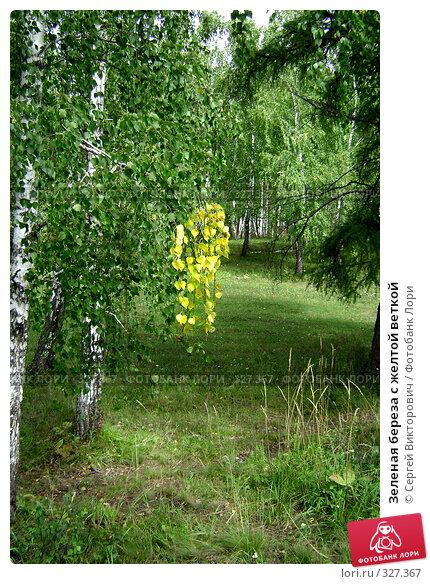 Зеленая береза с желтой веткой, фото № 327367, снято 18 мая 2007 г. (c) Усик Сергей Викторович / Фотобанк Лори