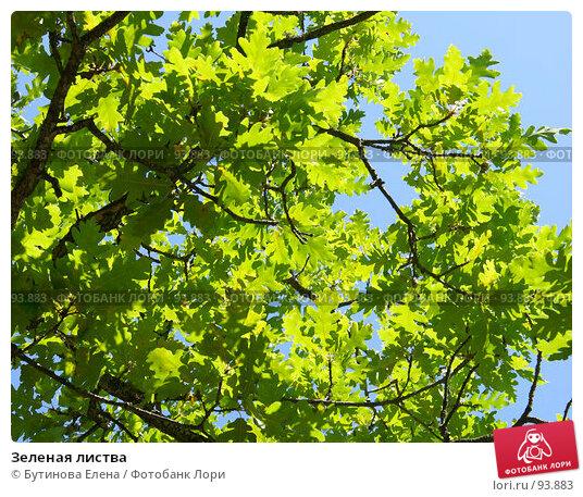 Купить «Зеленая листва», фото № 93883, снято 29 августа 2007 г. (c) Бутинова Елена / Фотобанк Лори