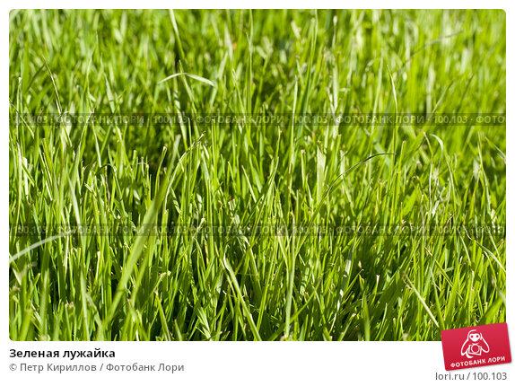 Зеленая лужайка, фото № 100103, снято 10 октября 2007 г. (c) Петр Кириллов / Фотобанк Лори