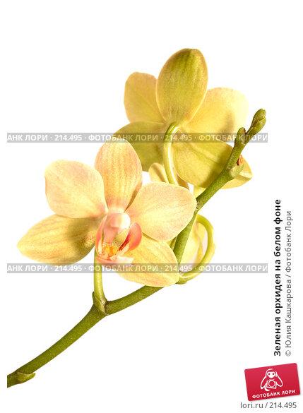 Зеленая орхидея на белом фоне, фото № 214495, снято 10 февраля 2008 г. (c) Юлия Кашкарова / Фотобанк Лори