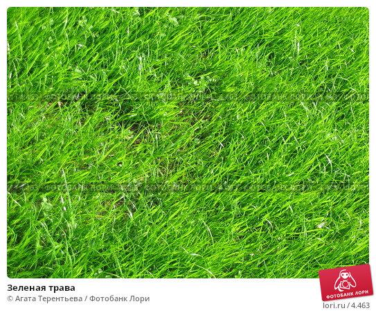 Зеленая трава, фото № 4463, снято 21 мая 2006 г. (c) Агата Терентьева / Фотобанк Лори