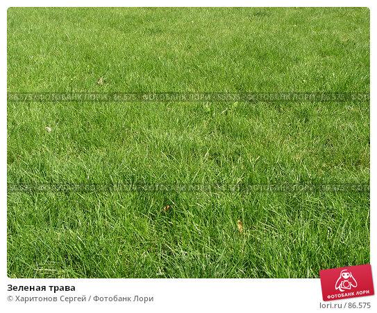 Зеленая трава, фото № 86575, снято 21 сентября 2007 г. (c) Харитонов Сергей / Фотобанк Лори