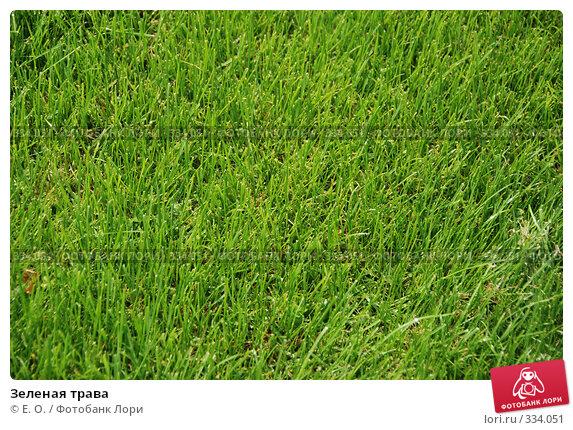 Купить «Зеленая трава», фото № 334051, снято 21 июня 2008 г. (c) Екатерина Овсянникова / Фотобанк Лори