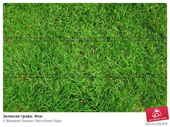 Зеленая трава. Фон, фото № 82815, снято 29 августа 2007 г. (c) Валерия Потапова / Фотобанк Лори