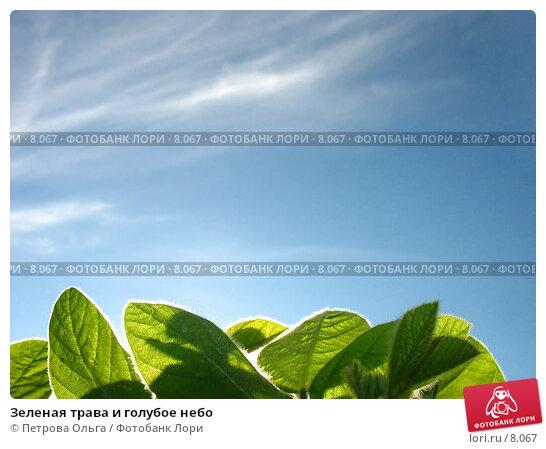 Зеленая трава и голубое небо, фото № 8067, снято 7 июля 2006 г. (c) Петрова Ольга / Фотобанк Лори