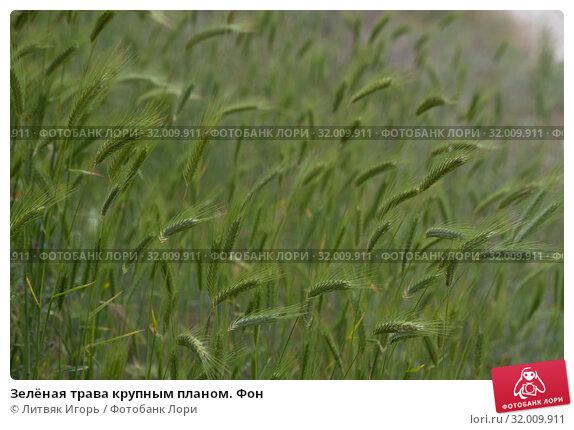 Купить «Зелёная трава крупным планом. Фон», фото № 32009911, снято 9 мая 2019 г. (c) Литвяк Игорь / Фотобанк Лори