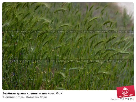 Купить «Зелёная трава крупным планом. Фон», фото № 32074551, снято 9 мая 2019 г. (c) Литвяк Игорь / Фотобанк Лори