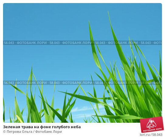 Зеленая трава на фоне голубого неба, фото № 58043, снято 3 июня 2007 г. (c) Петрова Ольга / Фотобанк Лори