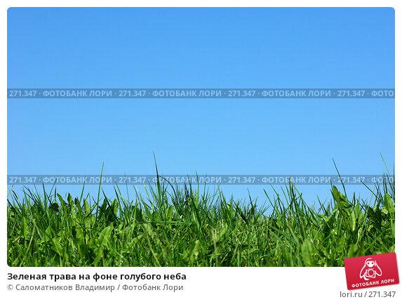 Зеленая трава на фоне голубого неба, фото № 271347, снято 22 октября 2016 г. (c) Саломатников Владимир / Фотобанк Лори