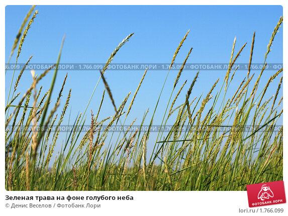Купить «Зеленая трава на фоне голубого неба», фото № 1766099, снято 17 августа 2019 г. (c) Денис Веселов / Фотобанк Лори