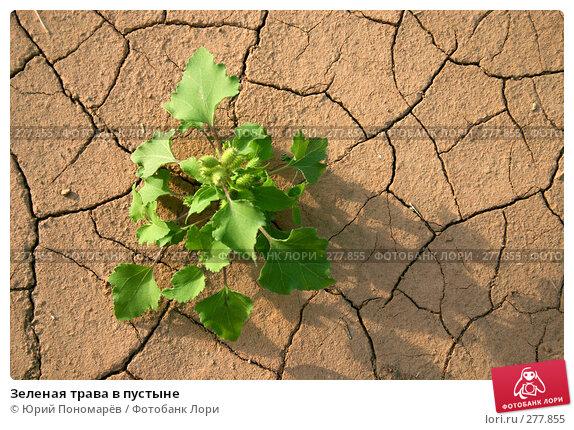 Зеленая трава в пустыне, фото № 277855, снято 2 сентября 2006 г. (c) Юрий Пономарёв / Фотобанк Лори