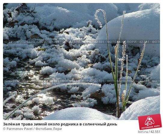 Зелёная трава зимой около родника в солнечный день, фото № 42551, снято 12 февраля 2007 г. (c) Parmenov Pavel / Фотобанк Лори