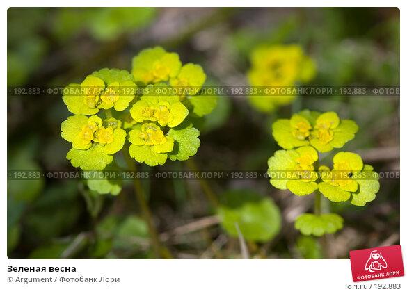 Зеленая весна, фото № 192883, снято 7 мая 2007 г. (c) Argument / Фотобанк Лори