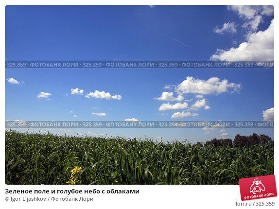 Зеленое поле и голубое небо с облаками, фото № 325359, снято 14 июня 2008 г. (c) Igor Lijashkov / Фотобанк Лори