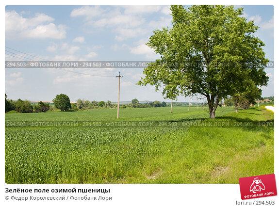 Зелёное поле озимой пшеницы, фото № 294503, снято 17 мая 2008 г. (c) Федор Королевский / Фотобанк Лори
