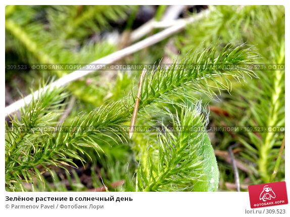 Зелёное растение в солнечный день, фото № 309523, снято 30 мая 2017 г. (c) Parmenov Pavel / Фотобанк Лори