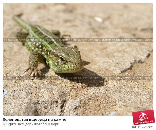 Зеленоватая ящерица на камне, фото № 26995, снято 3 мая 2006 г. (c) Сергей Ксейдор / Фотобанк Лори