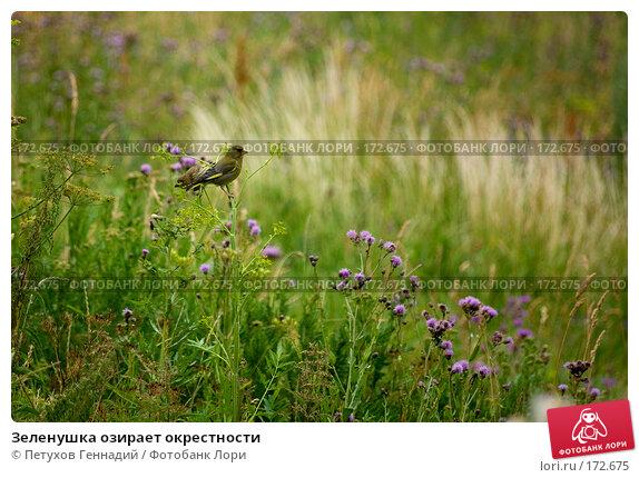 Зеленушка озирает окрестности, фото № 172675, снято 7 июля 2007 г. (c) Петухов Геннадий / Фотобанк Лори