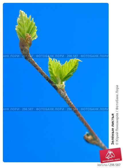 Зелёные листья, фото № 298587, снято 11 мая 2008 г. (c) Юрий Пономарёв / Фотобанк Лори