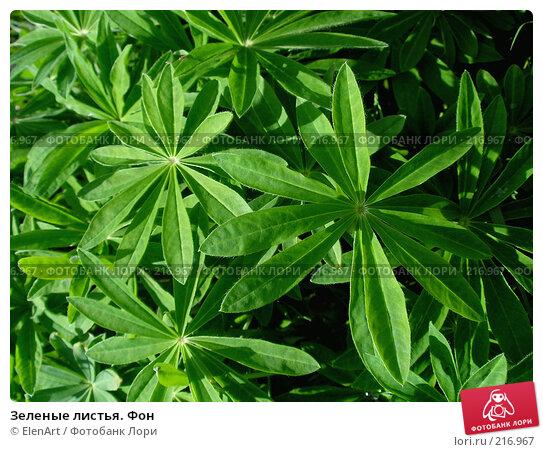 Зеленые листья. Фон, фото № 216967, снято 26 мая 2017 г. (c) ElenArt / Фотобанк Лори