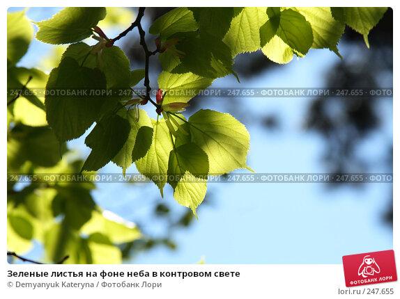 Зеленые листья на фоне неба в контровом свете, фото № 247655, снято 4 апреля 2008 г. (c) Demyanyuk Kateryna / Фотобанк Лори