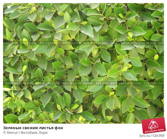 Зеленые свежие листья фон, фото № 124959, снято 26 февраля 2007 г. (c) Hemul / Фотобанк Лори