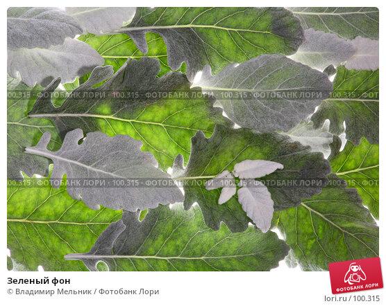 Зеленый фон, фото № 100315, снято 4 октября 2007 г. (c) Владимир Мельник / Фотобанк Лори