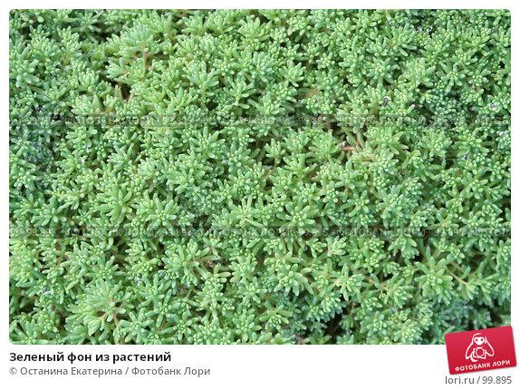 Зеленый фон из растений, фото № 99895, снято 23 сентября 2007 г. (c) Останина Екатерина / Фотобанк Лори