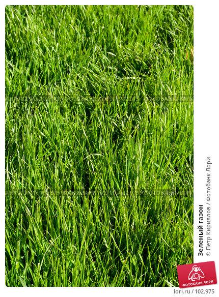 Зеленый газон, фото № 102975, снято 22 октября 2016 г. (c) Петр Кириллов / Фотобанк Лори