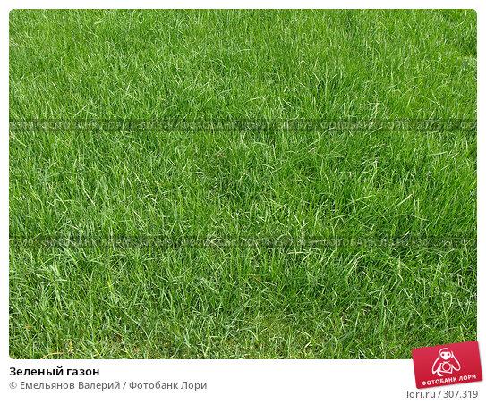 Зеленый газон, фото № 307319, снято 28 мая 2008 г. (c) Емельянов Валерий / Фотобанк Лори