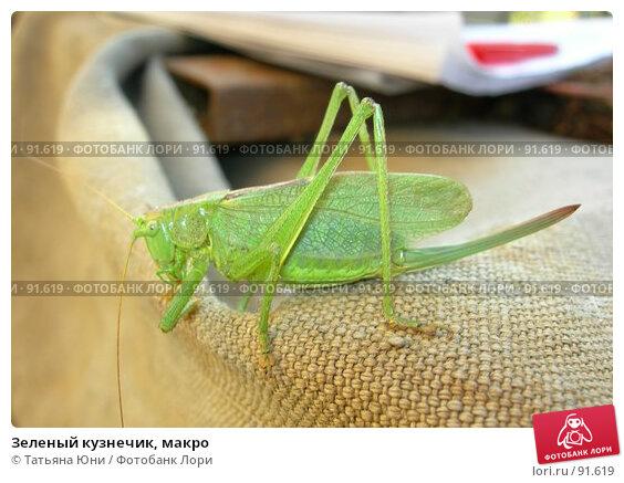 Зеленый кузнечик, макро, фото № 91619, снято 30 сентября 2007 г. (c) Татьяна Юни / Фотобанк Лори