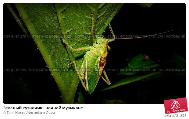 Зеленый кузнечик - ночной музыкант, фото № 81375, снято 22 июля 2007 г. (c) Таня Нотта / Фотобанк Лори