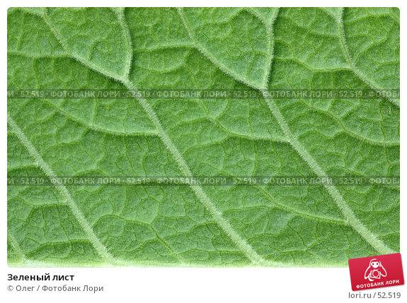 Зеленый лист, фото № 52519, снято 23 апреля 2017 г. (c) Олег / Фотобанк Лори