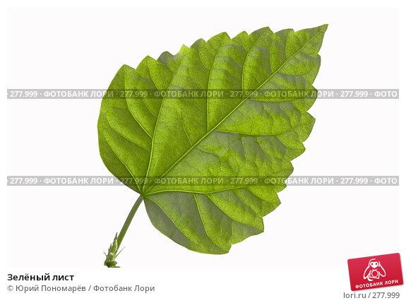 Зелёный лист, фото № 277999, снято 8 апреля 2008 г. (c) Юрий Пономарёв / Фотобанк Лори